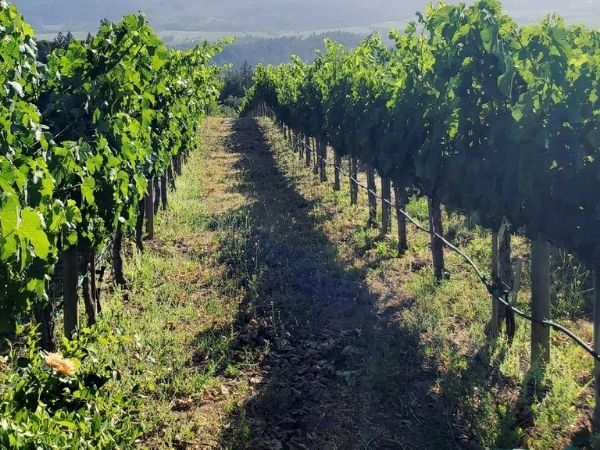 Hertelendy Vineyards