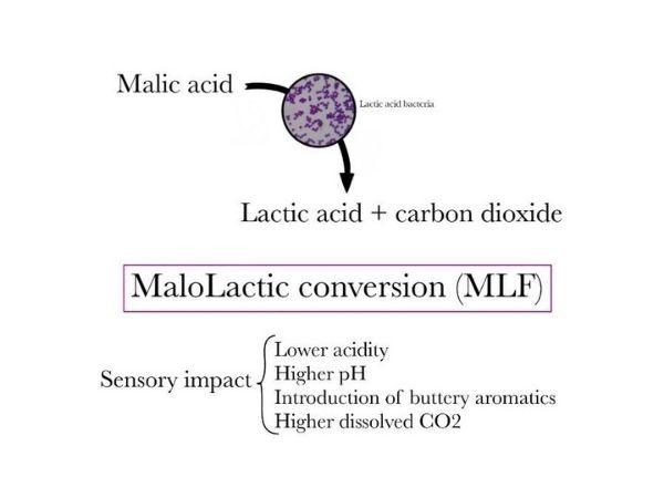 MaloLactic Conversion (MLF) diagram