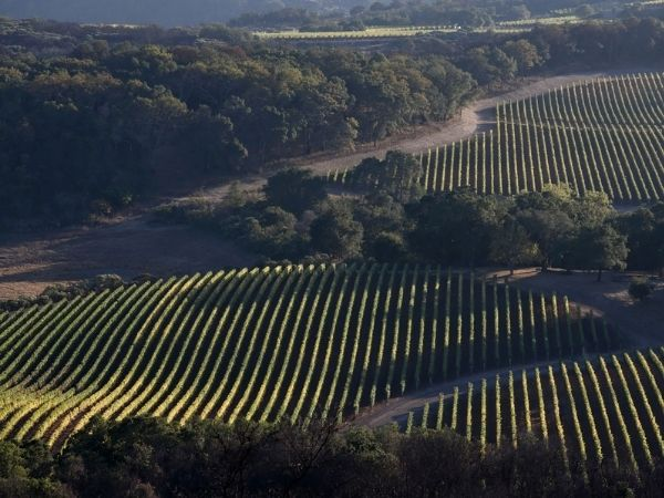Kenzo Estate's vineyards