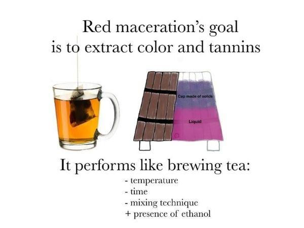 Red grape maceration goals