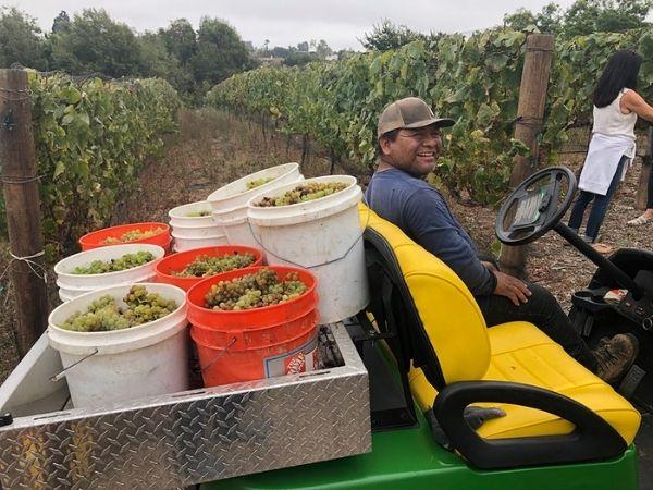 Harvesting at Grateful lane