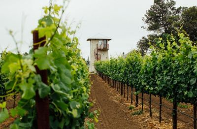 Photo for: A Must Add Chardonnay To Your Wine By The Glass Program