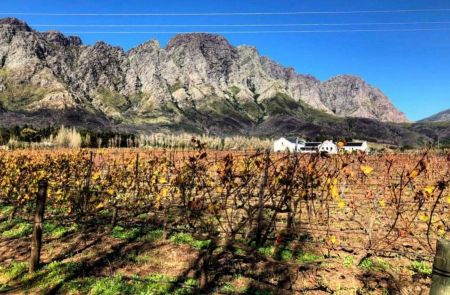 Photo for: Holden Manz Wine Estate wins gold at the top restaurant wine list awards
