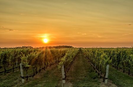 Photo for: 10 Upcoming Wine Regions Offering Great Value That Sommeliers Can Look At