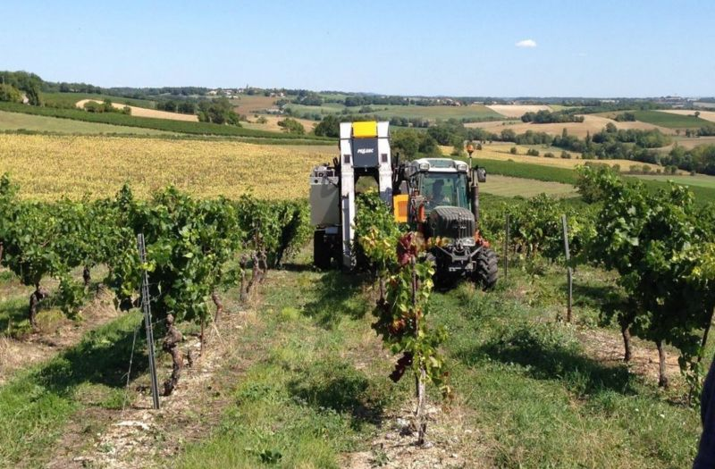Photo for: White Wine of the Year - 2018 Château de Lacroux/ Vigne de Maurival, Mauzac from France