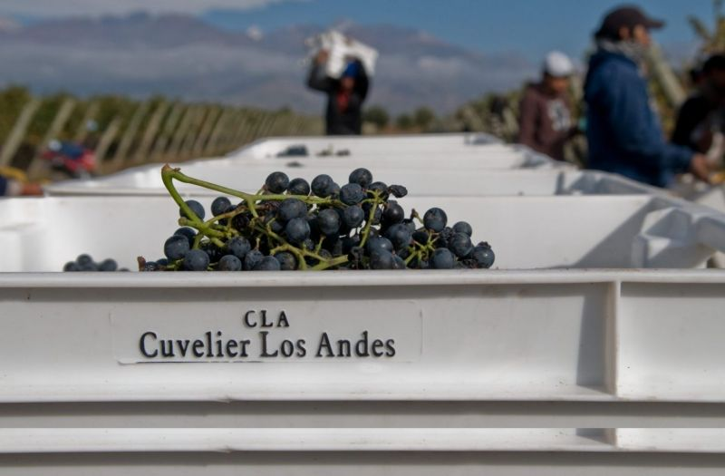 Photo for: Cuvelier Los Andes - Experience Mendoza