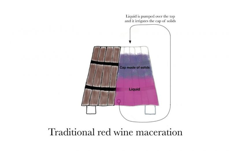 Photo for: Traditional Red Wine Maceration