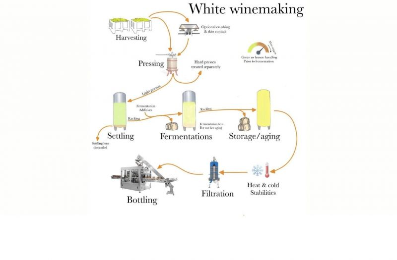 Photo for: White Winemaking and Sensory Clues