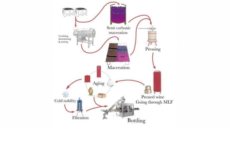 Photo for: Red winemaking for wine tasting